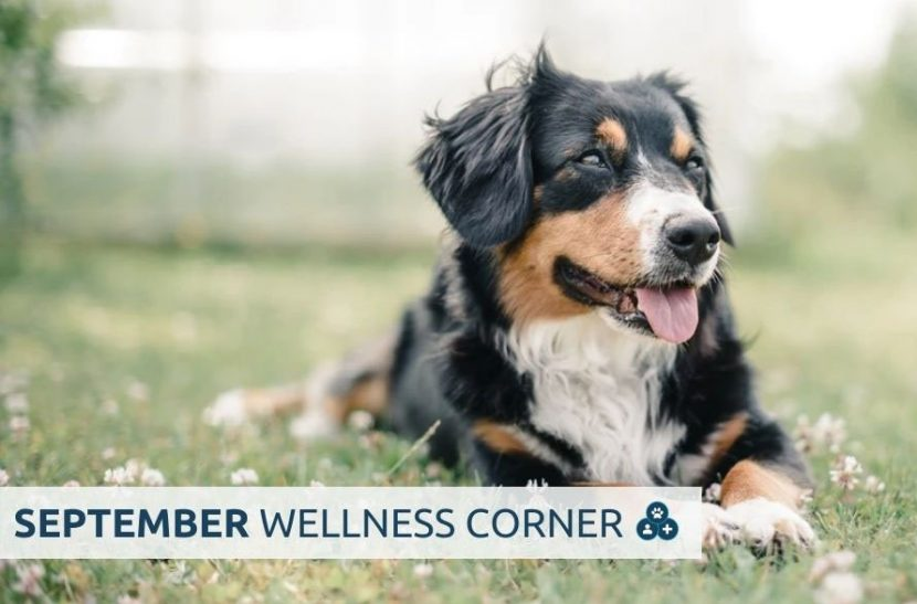 people pets & vets september wellness corner