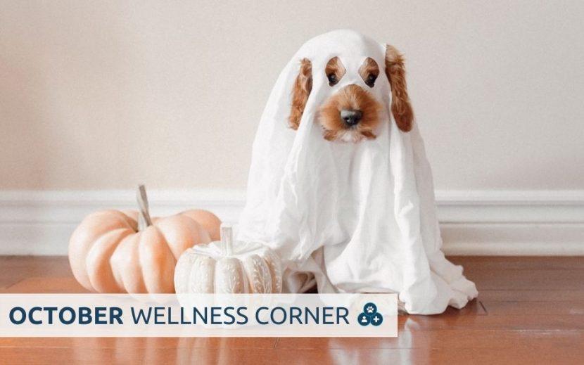 people pets & vets october 2021 wellness corner